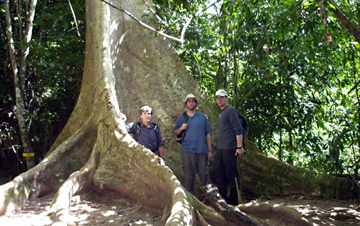 Taman Negara Malaysia  city pictures gallery : Malaysia – Taman Negara